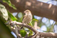 在树的麻雀 免版税图库摄影