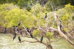 在树的黑鸬鹚 免版税库存图片