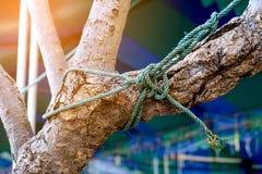 在树的绳索结,一条强的船舶海洋线一起栓了 免版税图库摄影