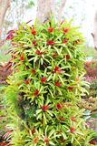 在树的Bromeliads在庭院里。 免版税库存照片