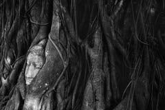 在树的Budha头 免版税库存图片