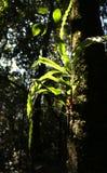 在树的Epiphyte,由后照反对黑暗的森林背景 免版税库存照片