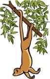 在树的Kinkajou 皇族释放例证