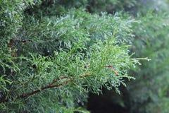在树的Raint 免版税库存图片