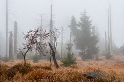 死的森林 免版税库存照片