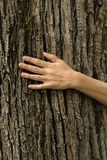 在树皮的妇女手,生态系保护概念,空间 免版税库存照片