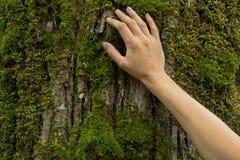 在树皮的妇女手,生态系保护概念,空间 免版税库存图片