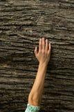 在树皮的妇女手,生态系保护概念,空间 库存图片