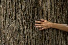 在树皮的妇女手,生态系保护概念,空间 图库摄影