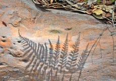 在树皮的蕨阴影 免版税图库摄影
