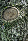 在树皮的结 免版税库存图片