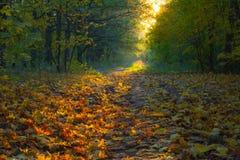 在树秋天风景的看法在晴天 免版税库存图片