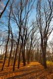 在树秋天风景的看法在晴天 库存照片