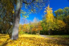 在树秋天风景的看法在晴天 免版税图库摄影