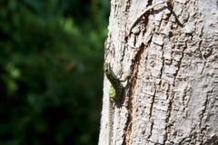 在树第10的蜥蜴 免版税库存照片