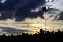在树篱的日落 免版税库存照片