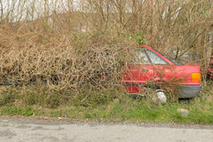 在树篱的汽车 免版税图库摄影