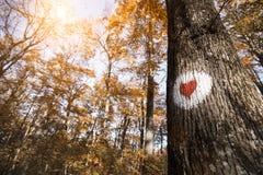 在树绘的红色心脏的画 库存照片