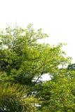 在树绿色下新叶子或灌木大大小到抽象形状里形成纹理和背景 免版税库存照片