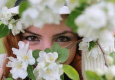 在树花后的女孩眼睛 库存照片