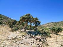 在树荫下的休息斑点 免版税库存照片