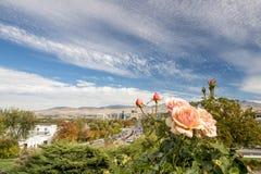 在树落有玫瑰的博伊西爱达荷城市 免版税库存图片