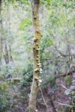 在树词根的蘑菇 库存照片