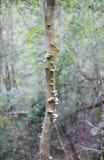 在树词根的蘑菇 免版税库存照片