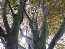 在树里面 库存照片