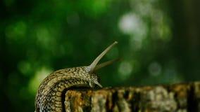 在树野生生物的蜗牛 在一棵树的蜗牛在森林6里 股票视频
