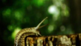 在树野生生物的蜗牛 在一棵树的蜗牛在森林7里 影视素材