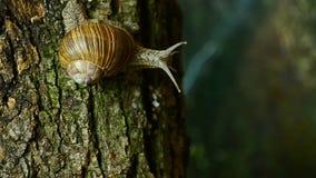 在树野生生物的蜗牛 在一棵树的蜗牛在森林9里 股票视频