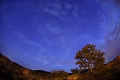 在树长的曝光噪声共同地manif的银河上升 免版税库存照片