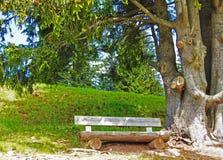 在树附近的一个长木凳 库存照片