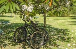 在树附近的两辆自行车 免版税图库摄影