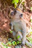在树附近的幼小猴子 免版税库存图片