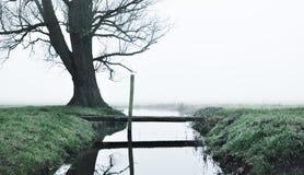 在树附近的弯曲处 库存照片