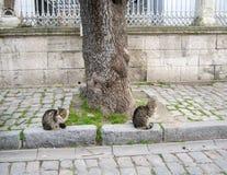 在树附近的猫 库存照片