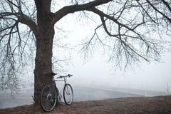 在树附近的老自行车 库存图片