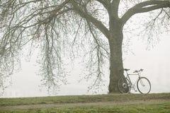 在树附近的老自行车 免版税库存图片