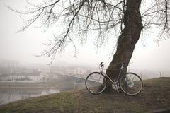 在树附近的老自行车 免版税图库摄影