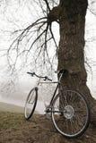 在树附近的老自行车 免版税库存照片