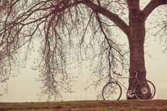在树附近的葡萄酒自行车在雾 库存照片