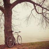 在树附近的葡萄酒自行车在雾 库存图片