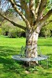 在树附近的蓝色金属长凳 库存照片
