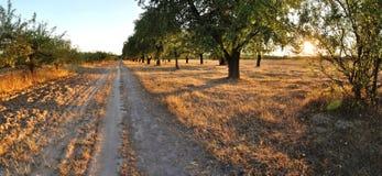 在树附近的路在光芒 免版税图库摄影