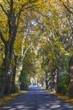 在树隧道的路在秋天 库存照片