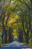 在树隧道的路在秋天 免版税库存照片