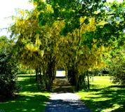 在树隧道的黄色花 免版税图库摄影