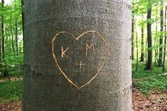 在树雕刻的心脏 免版税库存图片